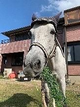 乗られた馬のプリクラシールをプレゼント中!