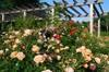 rosegarden-600x401.jpg