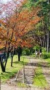 10月4日小鹿のつぶやき (2).jpg