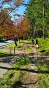 10月4日小鹿のつぶやき (3).jpg