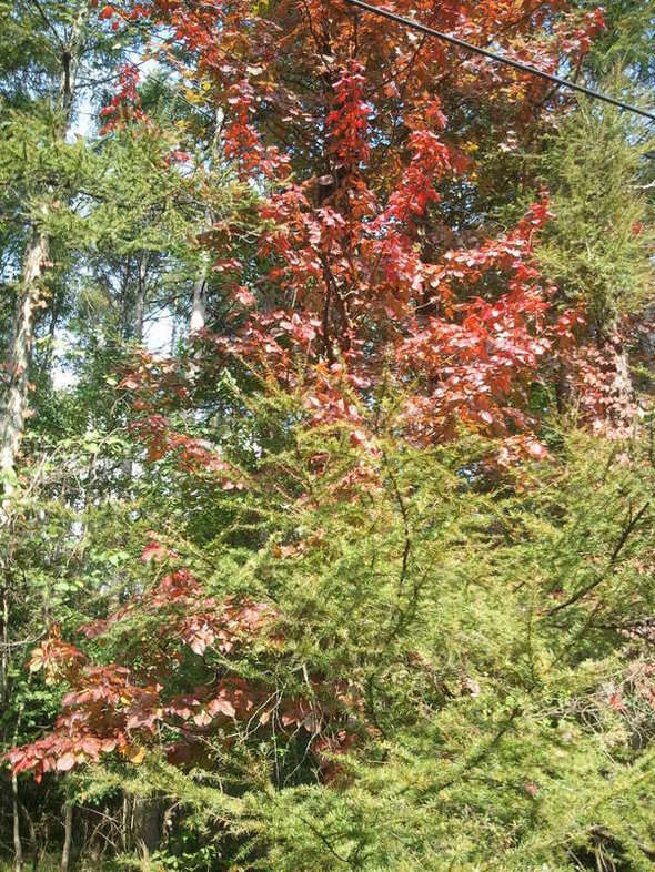 2011-10-08 13.43.50.jpg
